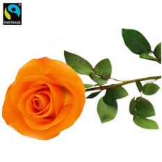 FAIRTRADE einzelne Rose orange