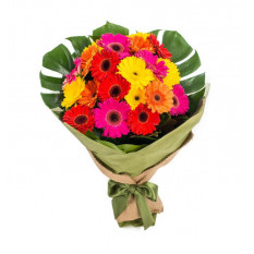 Gerberas Color Burst (20 Stiele)