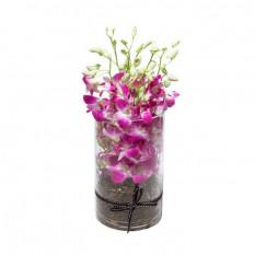 Majestätisch- Orchideen (8)