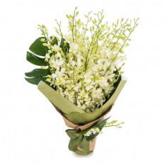 Singapur Orchideen - Eleganz