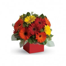 Glorious Gerberas - Blumenarrangement